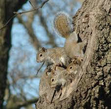 Squirrel family.jpg