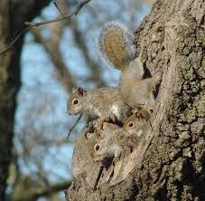 Squirrel family.jpg