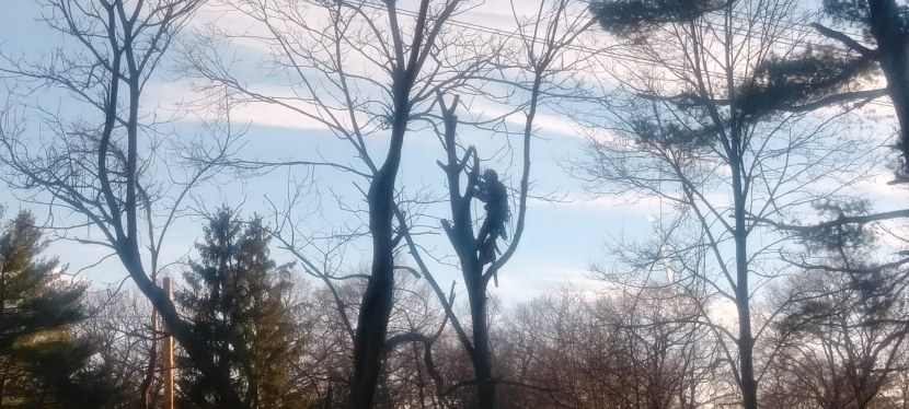 Moving the woods –trees